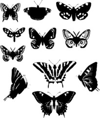 eleven black and white butterflies