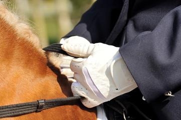 Papiers peints Equitation Reiten, Dressur, Hände, Handschuhe
