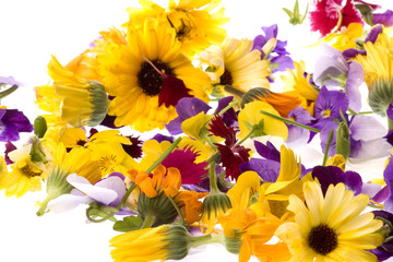 Edible Flowers Isolated