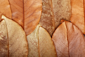 The texture of leaves
