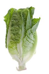 Romaine Lettuce Isolated