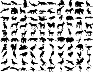 silhouettes wild animals Illustrations