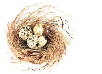 Bird nest with three quail eggs.