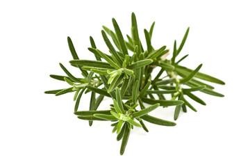 rosemary herb twig