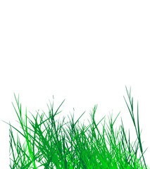 grass vector on white background