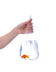 Package with goldfish