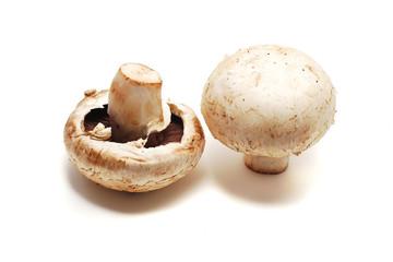 mushrooms isolated