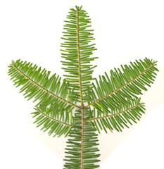 Evergreen Branch On White