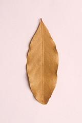 dry vanilla leaves
