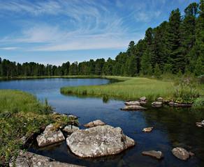 Foto op Aluminium Rivier Forest river