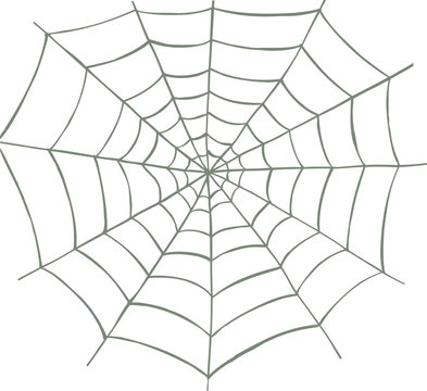 Vector illustrated spider web on white background