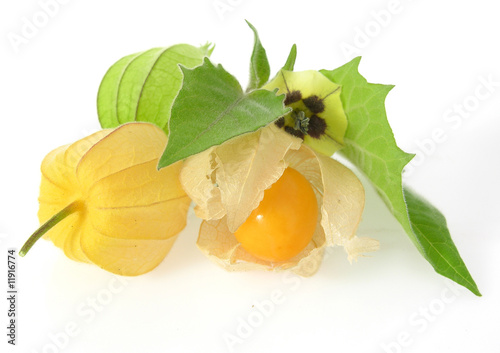 physalis bl te und frucht physalis peruviana bloom and. Black Bedroom Furniture Sets. Home Design Ideas