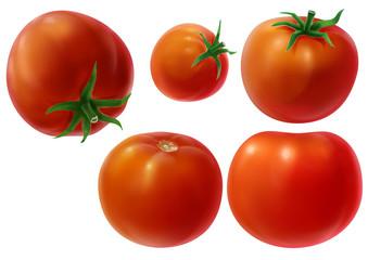 Whole Tomatoes Illustration