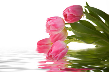 Pink tulips in water