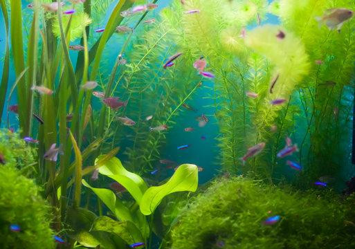 Aquarium with fish and seaweed