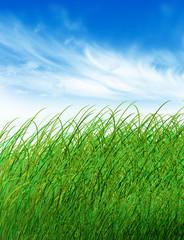 Green field blue sky