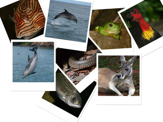 Photos of Australian Animals
