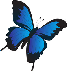 Flying Butterfly Illustration
