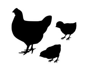 Huhn und Küken