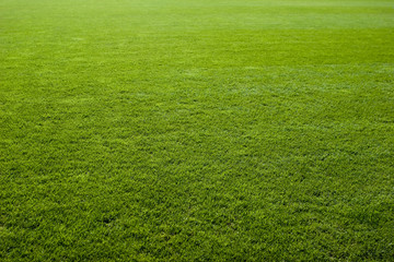Tuinposter Gras Green grass texture of a soccer field.