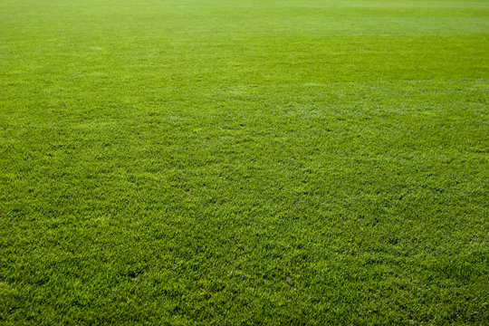 Green grass texture of a soccer field.