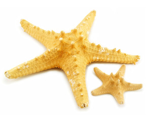 Two starfishes (small and big) isolated