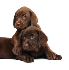 Two puppies on a white  background.