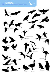 collection of 40 detailed silhouettes of different birds