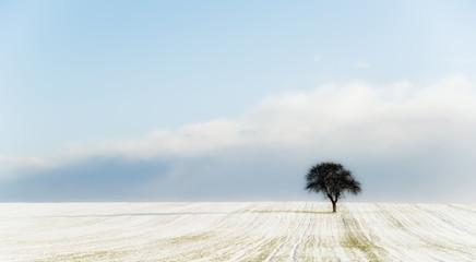un arbre isolé