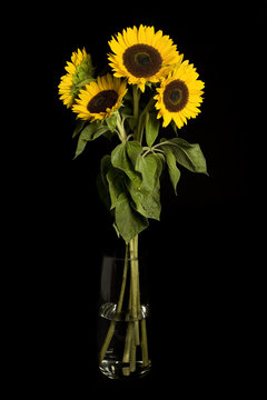 Bouquet of sunflowers against a black background.