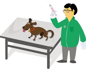 Fototapeta Weterynarz robi zastrzyk psu, chory zwierzak, klinika wterynarii obraz
