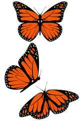 A set of three monarch butterflies