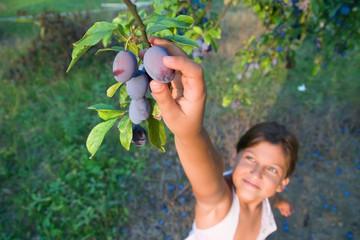 Small girl reaching a plum