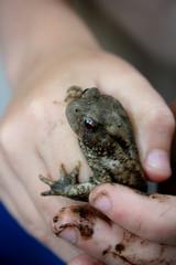 Frosch in Kinderhänden