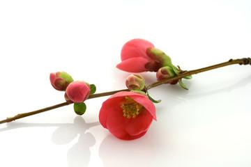 ramo con fiori