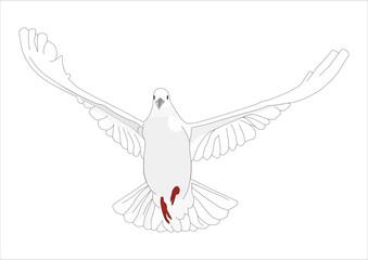 fliegende weiße Taube
