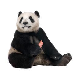 Zelfklevend Fotobehang Panda Giant Panda (18 months)