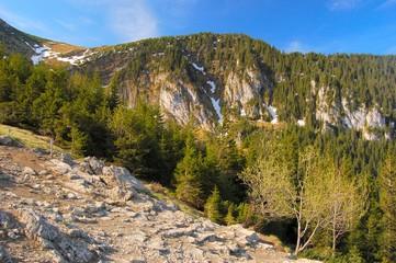Wall Mural - Path in polish high Tatras
