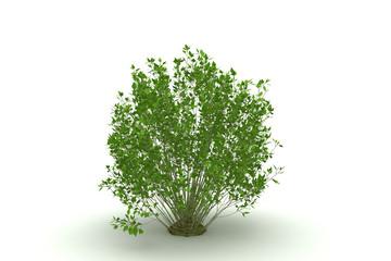 tree isolated (bush)