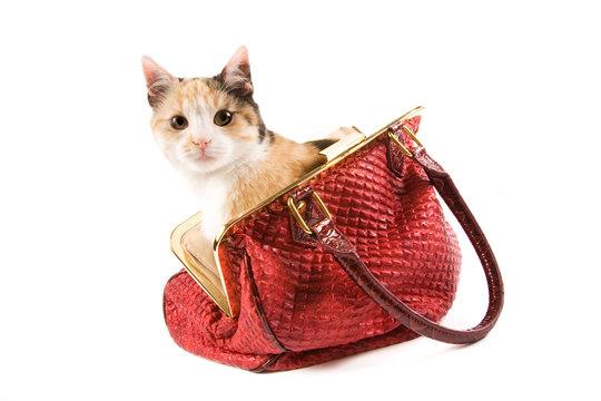 Cute kitten in a red bag