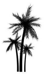 palm tree silhuettes