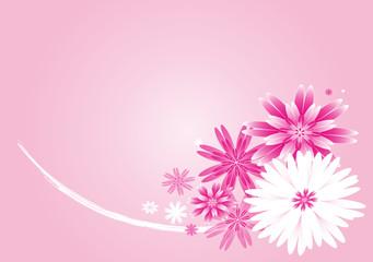 Bouquet de dahlia roses et blancs sur fond dégradé rose