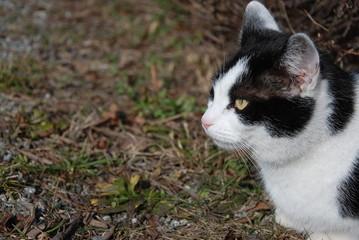 Katze schwarz weiß Profil