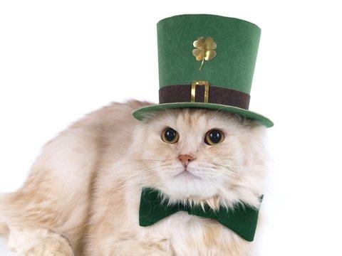 Beige St. Patrick's Day cat