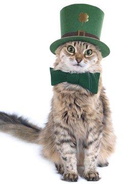 Cute St. Patrick's Day cat