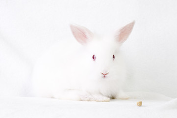 Cute white baby rabbit
