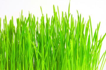 Drop on grass