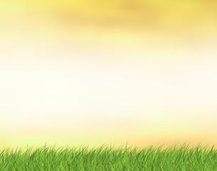 Evening green grass