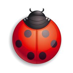 Round ladybug icon
