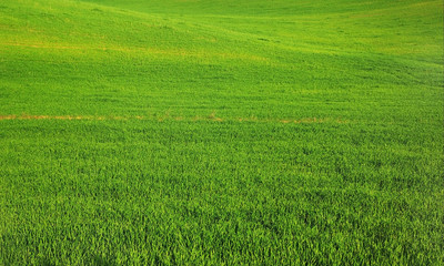 A sown green field.